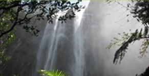 Minyon Falls Walk