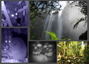 Day, Night Rainforest Package