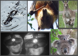 Platypus, Wildlife Tour and Night Vision Walk Package