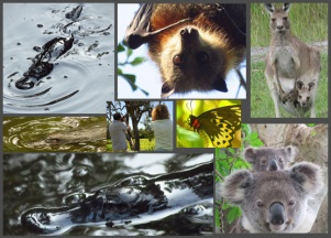 Platypus and Wildlife Tour Package