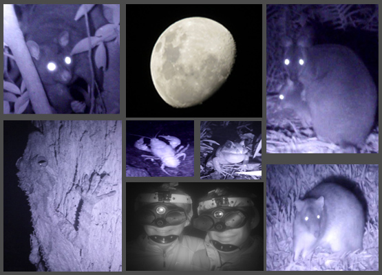 Night Vision Walk