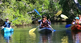 Eco Guided Kayaking or SUP Tours