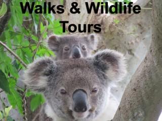 Walks and Wildlife tours